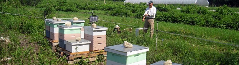 Red Barn Honey Home