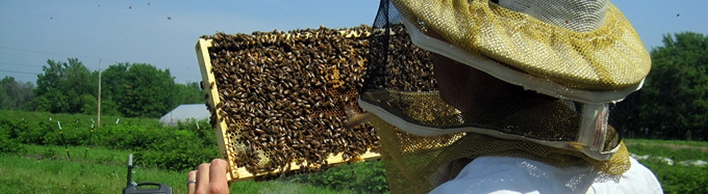 Bee/Honey Fact Image